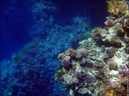 sony DSC TX10 foto 2015 185x138 Подводный фотоаппарат Sony Cyber shot DSC TX10 снимаем под водой!