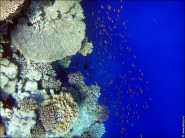 sony DSC TX10 foto 2016 185x138 Подводный фотоаппарат Sony Cyber shot DSC TX10 снимаем под водой!