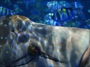 sony DSC TX10 foto 2018 185x138 Подводный фотоаппарат Sony Cyber shot DSC TX10 снимаем под водой!