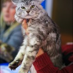 vistavka koshek sobak 2003 150x150 Фото с выставки кошек и собак, фотографии мейн кун, ашера, рэгдолл, саванна, экзот