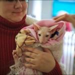 vistavka koshek sobak 2014 150x150 Фото с выставки кошек и собак, фотографии мейн кун, ашера, рэгдолл, саванна, экзот