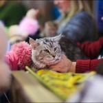 vistavka koshek sobak 2020 150x150 Фото с выставки кошек и собак, фотографии мейн кун, ашера, рэгдолл, саванна, экзот
