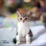 vistavka koshek sobak 2022 150x150 Фото с выставки кошек и собак, фотографии мейн кун, ашера, рэгдолл, саванна, экзот