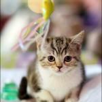 vistavka koshek sobak 2023 150x150 Фото с выставки кошек и собак, фотографии мейн кун, ашера, рэгдолл, саванна, экзот