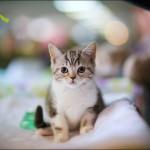 vistavka koshek sobak 2024 150x150 Фото с выставки кошек и собак, фотографии мейн кун, ашера, рэгдолл, саванна, экзот