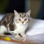 vistavka koshek sobak 2026 150x150 Фото с выставки кошек и собак, фотографии мейн кун, ашера, рэгдолл, саванна, экзот
