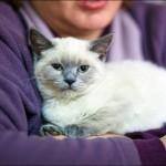 vistavka koshek sobak 2028 150x150 Фото с выставки кошек и собак, фотографии мейн кун, ашера, рэгдолл, саванна, экзот