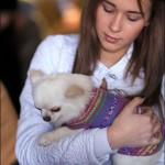 vistavka koshek sobak 2041 150x150 Фото с выставки кошек и собак, фотографии мейн кун, ашера, рэгдолл, саванна, экзот
